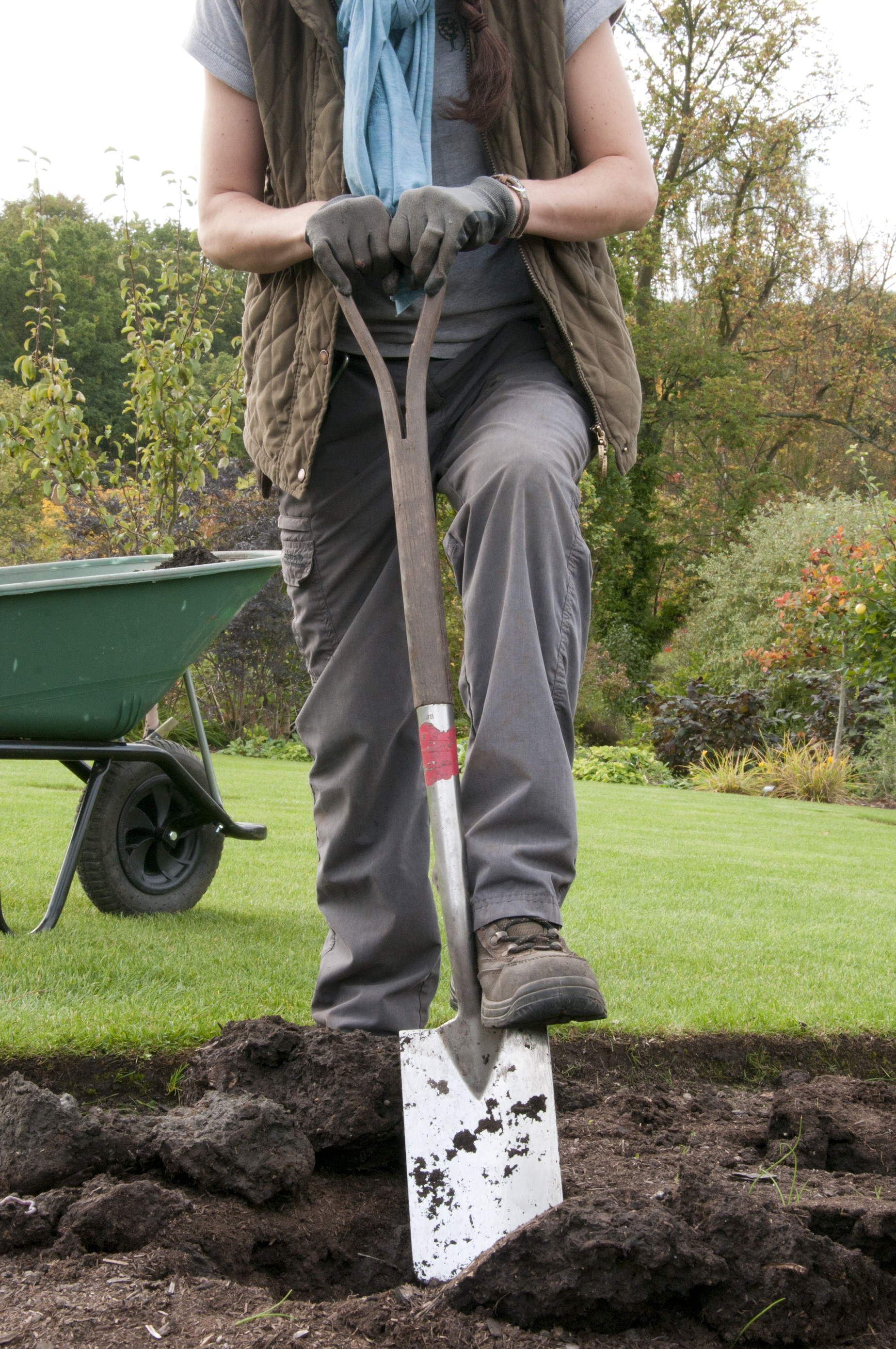 Digging a planting hole at RHS Garden Harlow Carr.